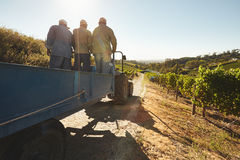 Vineyard worker on a wagon ride at farm Stock Photo