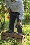 Vineyard working Royalty Free Stock Image