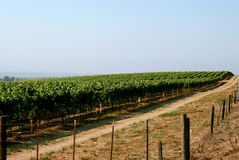 Vineyard2 fotos de stock