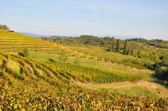 Italian Vineyards  Stock Photo