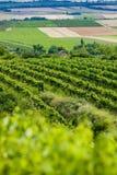 Vineyards. Southern Moravia, Czech Republic Stock Photos