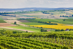 Vineyards. Southern Moravia, Czech Republic royalty free stock image