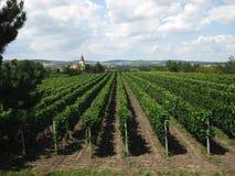 Vineyards. In Czech Republic, south Moravia Stock Image