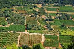 Vineyards Royalty Free Stock Photography