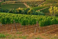 Vineyards. Vineyard hills at Chianti, Tuscany Stock Images