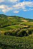 Vineyards. Hill vineyards at Chianti, Tuscany Royalty Free Stock Image