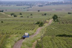 Vineyards. French vineyards in the Alsace area. A small farmer truck is driving down a curved road to work in the fields stock photo