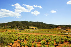Vineyards. Montferri vineyards of Tarragona in Spain royalty free stock image
