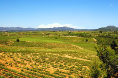 Vineyards. Montferri vineyards of Tarragona in Spain royalty free stock photo