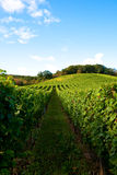Vineyards. In germany with blue sky stock image