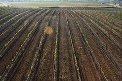 Vineyards. Shot of grape vineyards in Temecula California Stock Image