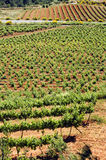 Vineyards. A vineyards landscape in Tarragona, Spain stock images