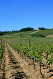 The vineyards Royalty Free Stock Image