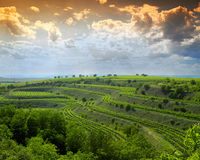 Vineyards. In Moravia, Czech Republic royalty free stock images