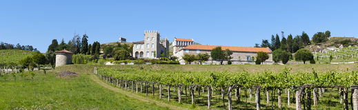 Vineyards. Panoramic of vineyards and old building Royalty Free Stock Image