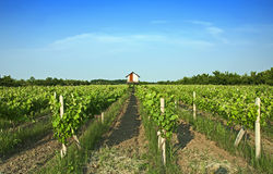 Vineyards Stock Photography