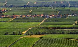 Vineyards. Vine fields on the south of Germany Stock Image