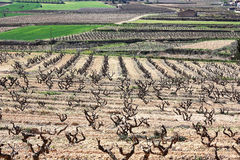 Vineyards. Royalty Free Stock Photos