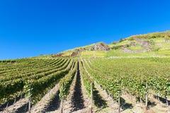 Vineyards. In the Ahr valley in autumn stock photos