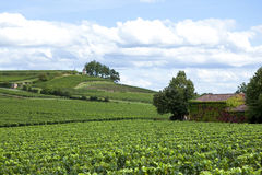Vineyards. Overlooking the vineyards of Saint-Emilion, near Bordeaux, France stock photos