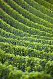 Vineyards. In St. Emilion, France Stock Photos