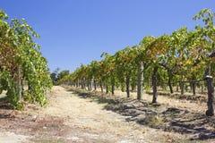 Vineyards. In Perth, Western Australia Stock Photo