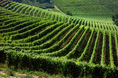 Vineyards Stock Photos