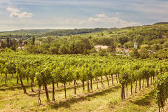 Vineyards. Landscape in Kamptal, lower Austria stock image