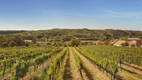 Vineyards. Landscape in Kamptal, lower Austria stock images