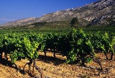 Vineyards. Cotes du rhone vineyards dentelles de montmarail vaucluse provence south of france royalty free stock images
