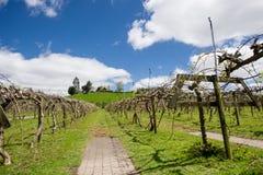 Vineyards. Under the blue sky, beautiful vineyards Stock Photos