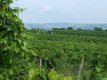 Vineyards. View from the vineyards of the landscape of South Moravia stock image