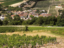 Vineyards. In the loire valley france stock photos