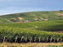 Vineyards. In the loire valley france royalty free stock photography