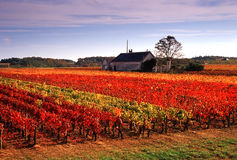 Vineyards. In the loire valley france stock images
