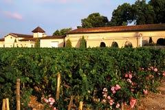 Vineyards. Haut medoc vineyards bordeaux france royalty free stock image