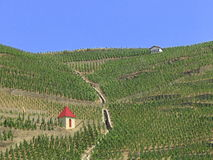 Vineyards Stock Image