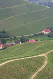 Vineyards. South Germany, spring 2008. Famous vineyards near Oberkirch royalty free stock photo