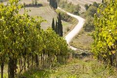 Vineyards Stock Image