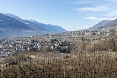 Vineyards above Sondrio an Italian town and comune located in the heart of the wine-producing Valtellina region - Population 20,00. Vineyards above Sondrio an Royalty Free Stock Images