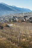 Vineyards above Sondrio an Italian town and comune located in the heart of the wine-producing Valtellina region -. Vineyards above Sondrio an Italian town and Royalty Free Stock Photos