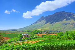 Vineyards against awesome mountains Royalty Free Stock Images