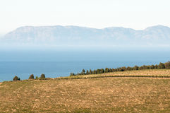 Vineyards against backdrop of False Bay and Kalk Bay Mountains Royalty Free Stock Images