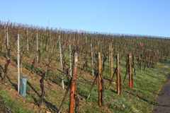 Vineyards in winter, Luxembourg. Vineyards against a blue winter sky, Luxembourg Stock Photography