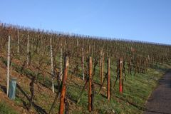Vineyards in winter, Luxembourg. Vineyards against a blue winter sky, Luxembourg Royalty Free Stock Photo