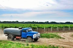 Vineyards. Agriculture in Taman. Stock Photo