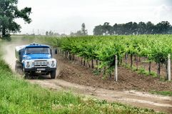 Vineyards. Agriculture in Taman. Stock Image