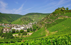 Vineyards in the ahr valley Stock Photography