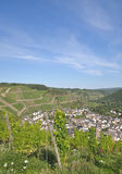 Vineyards in the ahr valley,Germany Stock Photos