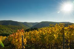 The vineyards of Ahrtal in Ahrweiler. In autumn stock images